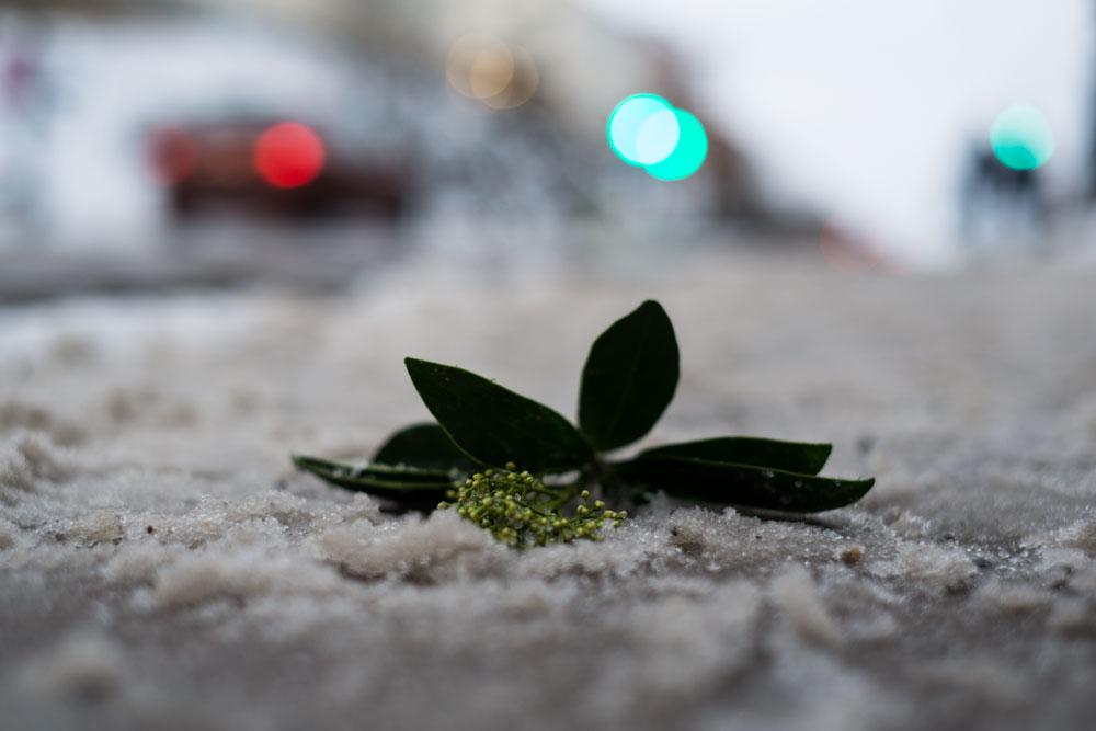 snöslask och tappad blomma på hornsgatan