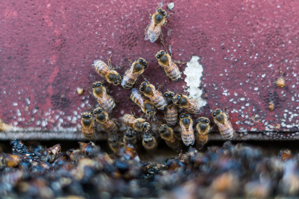 Vinterbin, fluster, bikupa.