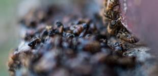 Vinterbin, fluster, bikupa